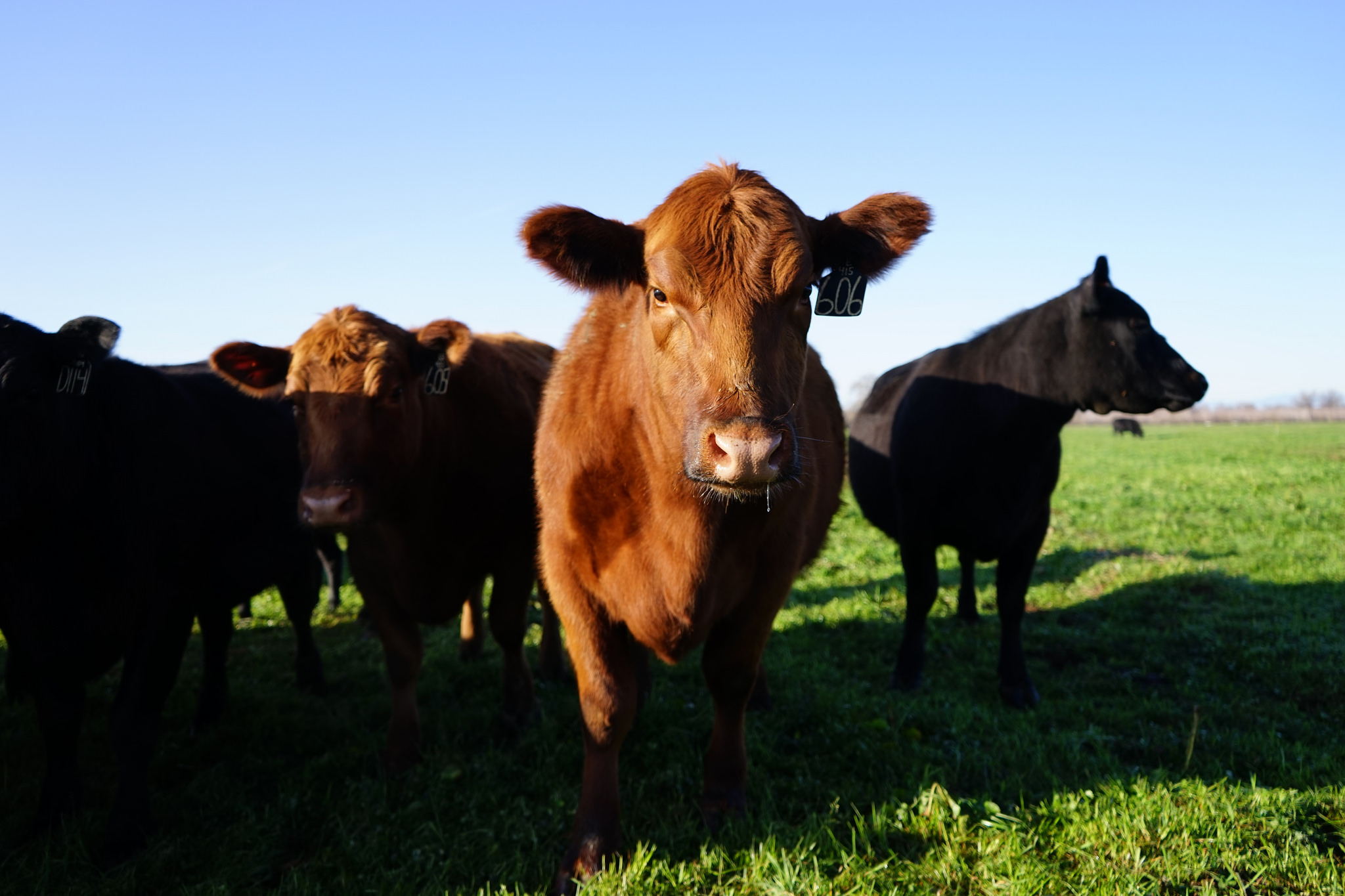 Ranching with Holistic land management