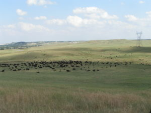 Effective livestock grazing is the way to a sustainable future.