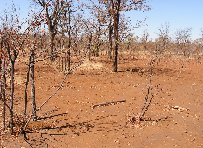 Zimbabwe (before)