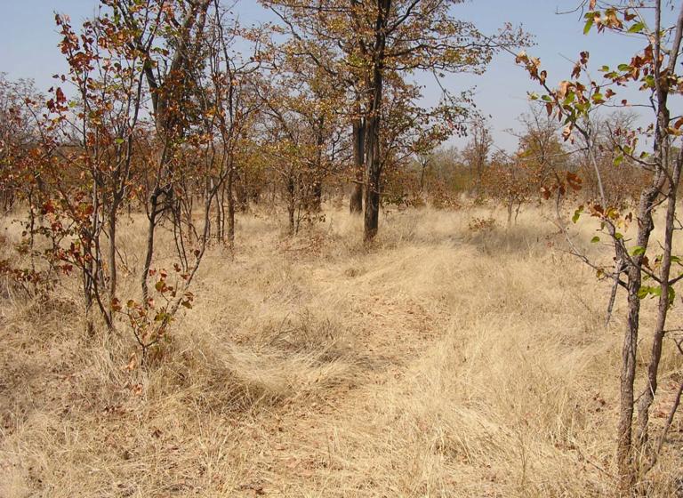 Zimbabwe (after)