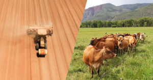 GMO soy field vs. cows on pasture