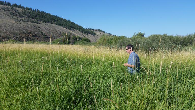 Briant in grass