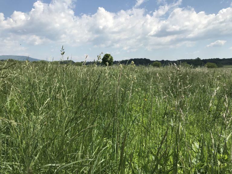 VA Grassland