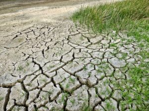 barren land with scattered grass